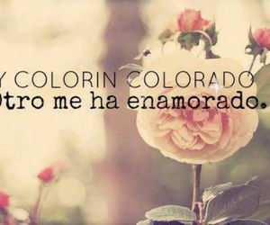 frases, in love, and colorin colorado image