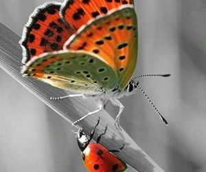 butterfly and ladybird image