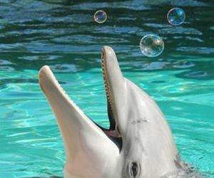 animal, dolphin, and bubbles image