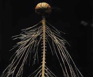 brain, dark, and nerves image