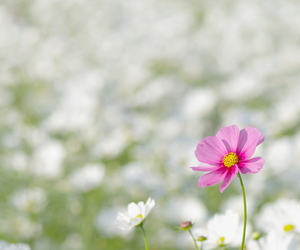 blur, meadow, and pink image