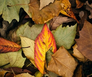 autumn, wallpaper, and color image