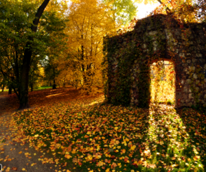 cracow, forest, and park image