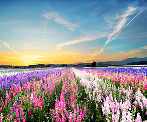 flowers, sky, and field image