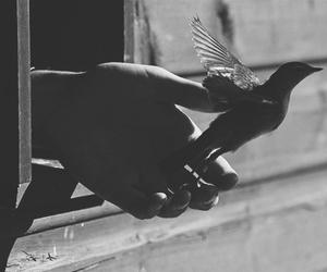 bird and freedom image