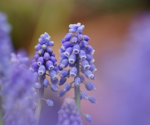 flowers, focus, and nature image