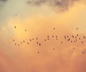 birds, scenery, and sky image