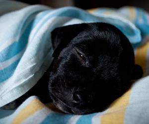 dog, cute, and barichy image