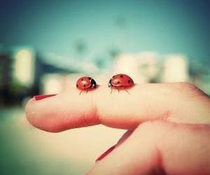 ladybug, red, and fingers image