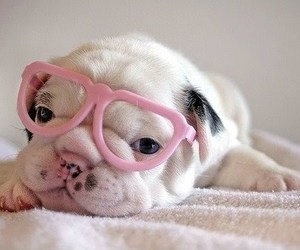 dog, girly, and pretty image