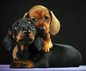 Animais, love, and dogs image