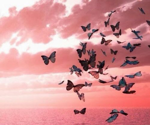 butterfly, pink, and sea image