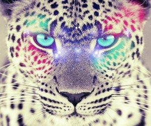 animal, tiger, and eyes image