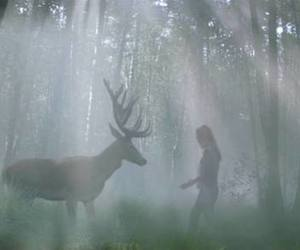 deer, forest, and girl image
