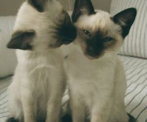 cats and Gatos image