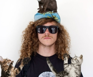 cats and workaholics image