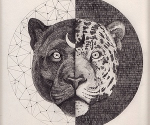 animal, leopard, and moon image