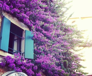 flowers, Greece, and street image