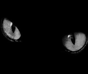 cat, eyes, and black cat image