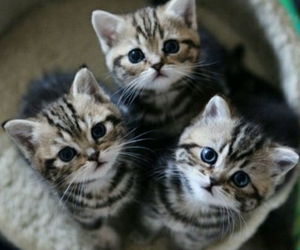 baby, cats, and cute image
