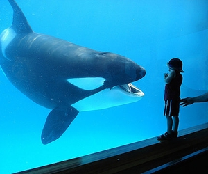 whale, boy, and animal image