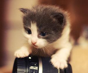 cute, cat, and camera image