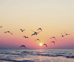 bird, beach, and sunset image