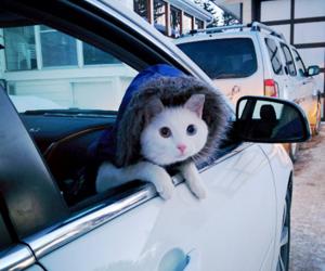 cat, cute, and car image