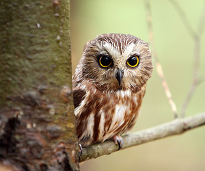 animals, owl, and owls image