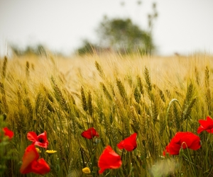flowers, field, and nature image