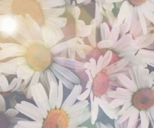 colours, cute, and daises image