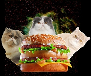 design, fat, and galaxy image