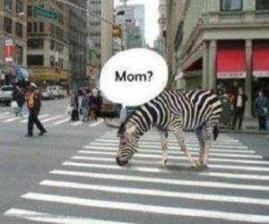 funny, mom, and zebra image