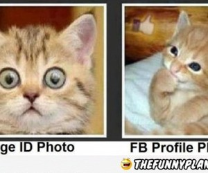 funny, cat, and photo image