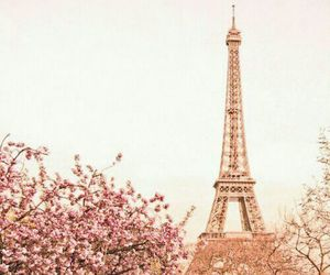 paris, pink, and flowers image