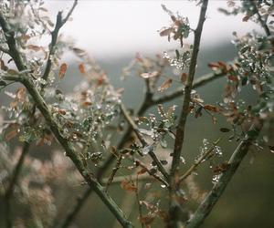 tree and vintage image
