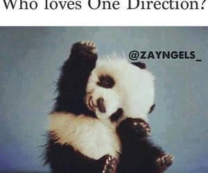panda, sweet, and 1d image