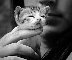 cute, cat, and photography image