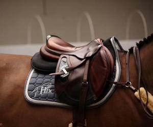 brown, saddle, and horse image