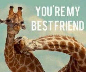 animal, best friend, and friendship image