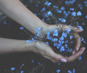 field, forget me not, and flowers image