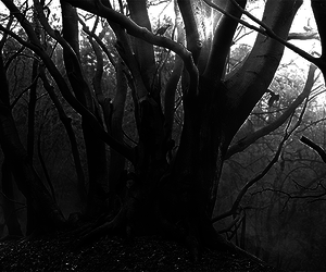 Darkness, lost, and nature image