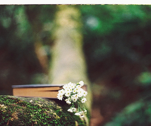 book, nature, and flowers image