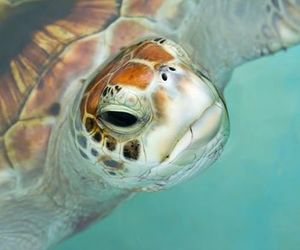 cute animals, sealife, and turtle image