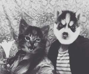crazy, faces, and kitties image
