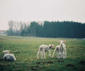 photography, animal, and hipster image