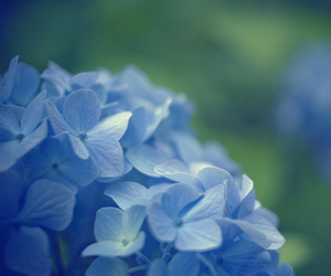blue, blur, and photography image