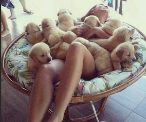 dogs, sweet, and cute image