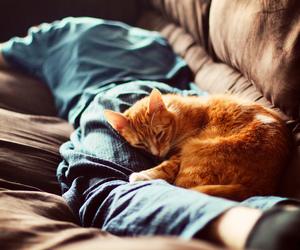 cat, sleep, and boy image