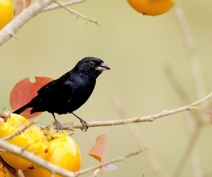 bird, black, and branches image
